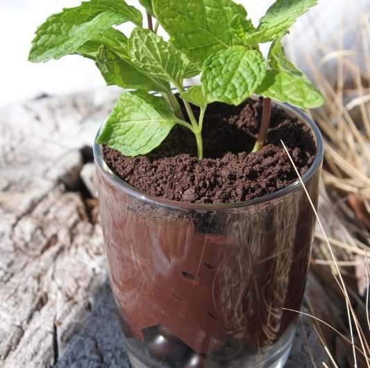 Edible Potted Plant Pudding1